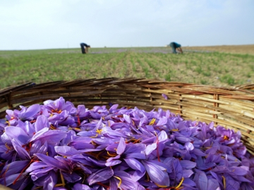 Flowers That Have Changed the World of Food #2: Saffron | The Silk ...